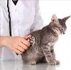 Ветеринарные клиники в Юрле